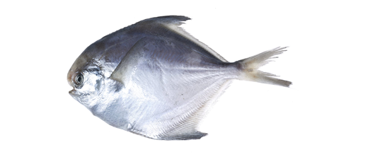 Moon Fish Image