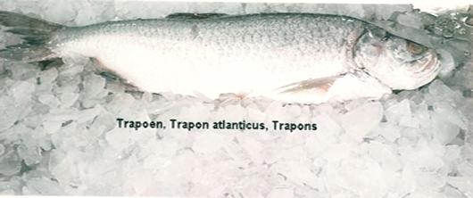 Trapon Image